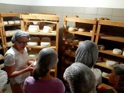 Знайомство із виробництвом козячого сиру